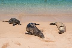 Maui_Big-Beach_Seehun-Schildkröte