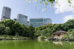 Tokio_Teehaus